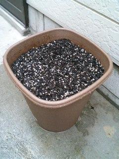 ムカゴを植えました